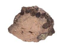 Естественный образец nodule фосфорита разделил с зернами glauconite на белой предпосылке Стоковые Фотографии RF