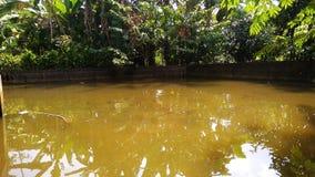 естественный пейзаж в рыбном пруде тень дерева рыб стоковая фотография rf