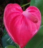 Естественный пейзаж красных цветков которые красивы и соответствующие для обоев стоковое фото