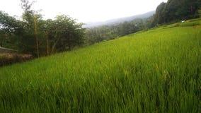 естественный пейзаж послужен в течение дня и соответствующий для обоев стоковое фото rf