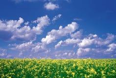 естественный пейзаж Стоковая Фотография RF