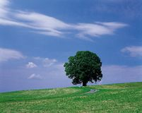 естественный пейзаж Стоковые Изображения RF