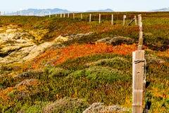 Естественный покрашенный ландшафт пляжем Стоковое Изображение