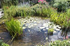 Естественный пруд воды задворк с водорослями и малым фонтаном стоковые фото