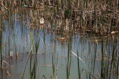 Естественный пруд загрязнян с отбросом нечистот и домочадца Зараженная вода от каналов canalization загрязняет природу environ стоковые изображения