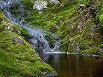 Естественный пруд стоковая фотография rf