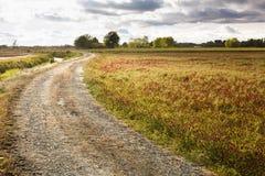 Естественный путь вырасти рис Стоковое Изображение