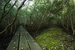 Естественный путь или человеческ-сделанный путь стоковое фото rf