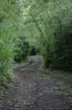 естественный путь Стоковые Изображения RF