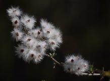 Естественный разгон семени Стоковое Изображение RF