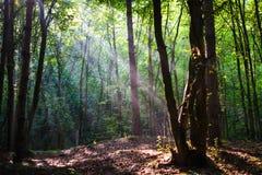 Естественный свет в зеленом ландшафте леса Стоковое Изображение RF