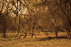 Естественный свет Стоковые Изображения