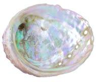 Естественный сырцовый scallop на белой предпосылке стоковые изображения