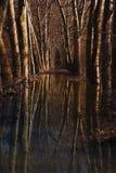 естественный тоннель Стоковое фото RF