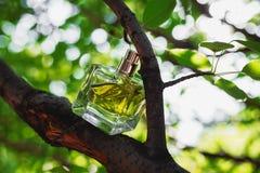Естественный дух на зеленой предпосылке Стоковые Фото