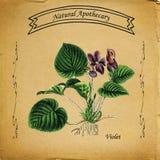 Естественный фиолет Apothecary Стоковое Фото