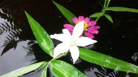 Естественный цветок на waterwall Стоковая Фотография