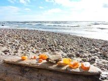 Естественный янтарь на побережье Балтийского моря, Литве Стоковые Фотографии RF