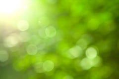 Естественным предпосылка запачканная зеленым цветом Стоковая Фотография RF