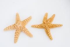 2 естественных морской звезды Стоковое Изображение