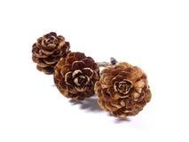 3 естественных сухих крошечных конуса сосны цветка при ветвь дерева изолированная на белой предпосылке Стоковые Изображения