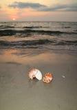 2 естественных seashells на тропическом пляже захода солнца Стоковая Фотография RF