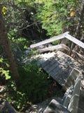 лестницы в следе Стоковые Изображения