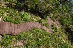 лестницы сада Стоковые Изображения RF