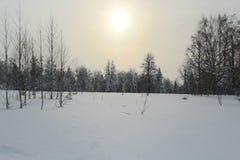 лес зимы Стоковые Фотографии RF