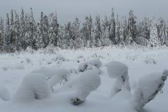 лес зимы стоковое изображение