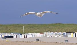 летание пляжа над чайкой Стоковое Изображение