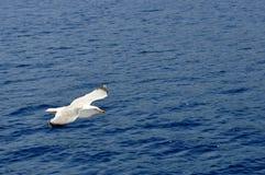 летать над чайкой моря стоковая фотография rf