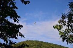 летать свободно стоковая фотография rf