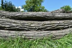 детализируйте древесину текстуры кольца кучи серий журналов деревянную Стоковая Фотография