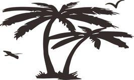 детальная пальма Стоковая Фотография RF