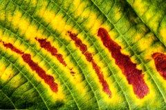 детальная текстура листьев Стоковые Фото