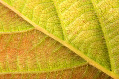 детальный зеленый желтый цвет листьев Стоковые Фотографии RF