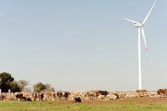 деталь коровы и eolic электростанции в луге Стоковая Фотография RF