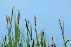 деталь трав Стоковые Фотографии RF