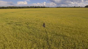 детеныши пшеницы девушки поля Воздушное видео сток-видео