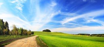 лето ландшафта солнечное Стоковая Фотография RF