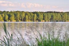 лето ландшафта солнечное Стоковое Изображение