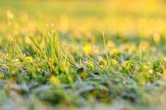 лето завода травы одного нерезкости предпосылки Стоковая Фотография