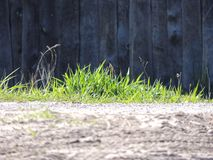 лето завода травы одного нерезкости предпосылки Стоковые Фото