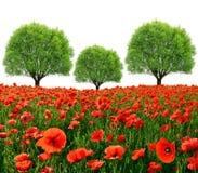 лето красного цвета мака цветового поля индийское Стоковое Изображение RF