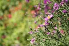 лето неба лилий сада цветков предпосылки голубое яркое Короткое глубин--поле Стоковая Фотография