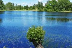 лето парка дня солнечное Стоковые Фото