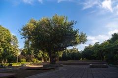 лето парка Стоковая Фотография RF