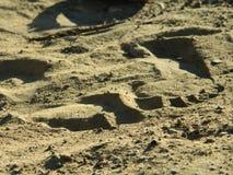 лето песка печати ноги пляжа отслеживает каникулу Стоковая Фотография RF