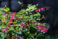 лето предпосылки естественное Стоковое Изображение RF